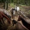 Koně na Licoměrsku