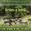 Workshop Krása a koně