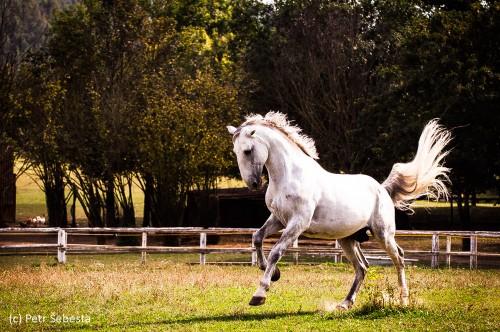 Workshop Krása a koně – práce studentů